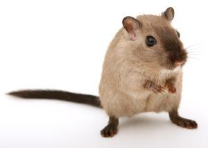 hamster 1627449098
