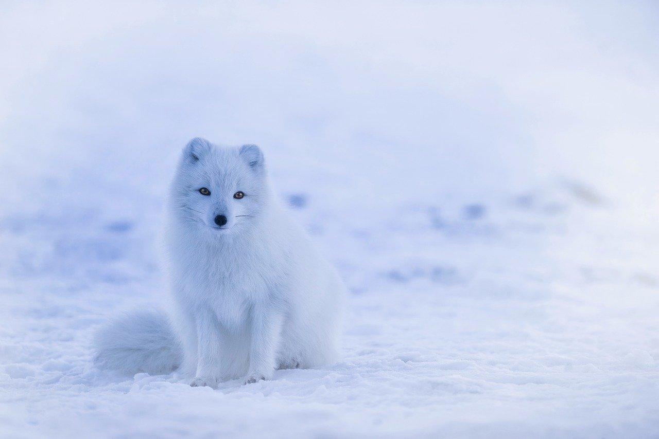 fox 1634494952