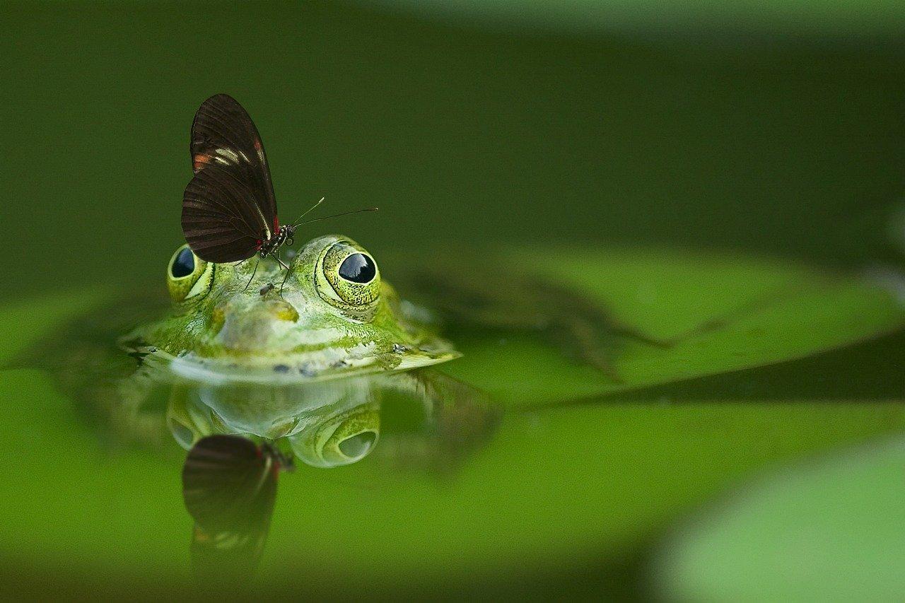 frog 1634491012